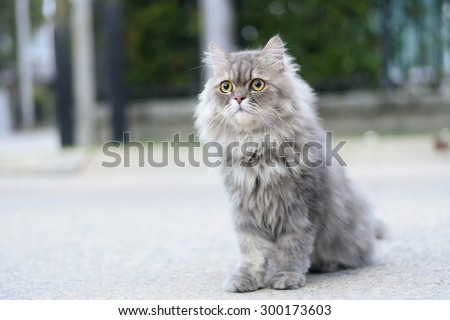 Persian cat relax on road - stock photo