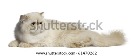 Persian Cat, 2 years old, lying in front of white background - stock photo