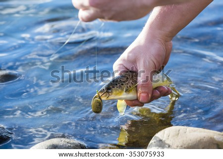person catch and release fishing for  trout - stock photo