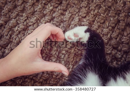 Person's hand and a cat's paw making a heart shape.  Instagram toned effect. - stock photo