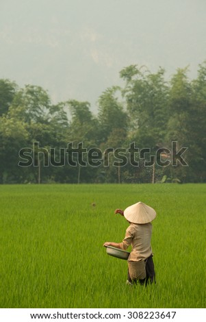 Person seeding the fields with rice in Mai Chau in Vietnam - stock photo