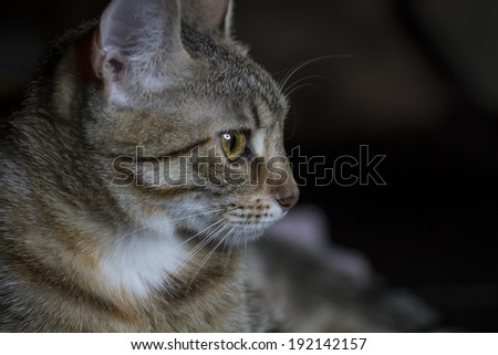 Pet, Adorable common cat hair tabby - stock photo