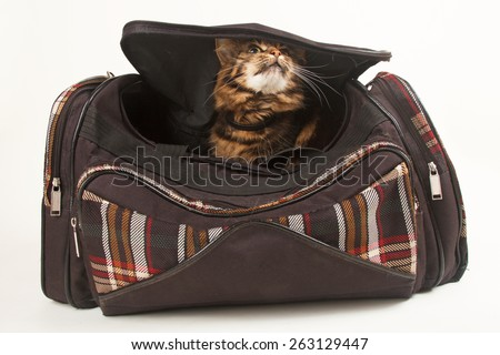 pet cat in a carry on bag - stock photo