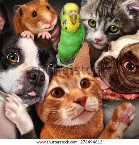 Pet group concept as dogs cats a hamster and budgie gathered together as a symbol for veterinary care and support or pets store design element for home animals advertising and marketing. - stock photo
