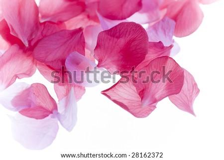 Petals - stock photo