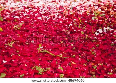 petals at garden floor - stock photo