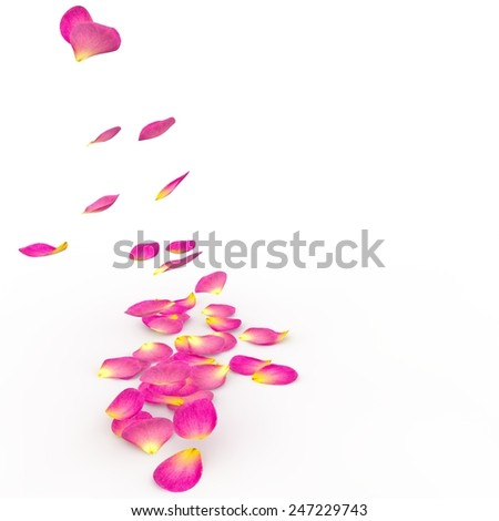 Petals of roses fall on a floor. The isolated background - stock photo