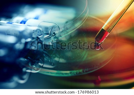 Petri dish. Laboratory concept. - stock photo