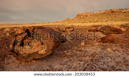 Petrified logs strewn on the desert floor in Petrified Forest National Park in Arizona. - stock photo
