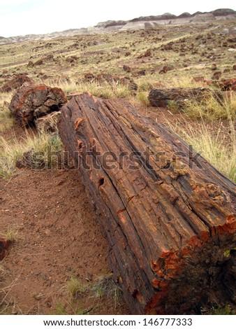 Petrified Wood, Petrified Forest National Park, Arizona, USA - stock photo