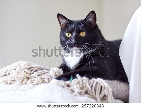 pets, domestic animals and comfort concept - black and white cat lying on plaid at home - stock photo