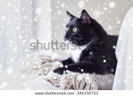 pets, domestic animals and comfort concept - black and white cat lying on plaid at home over snow effect - stock photo