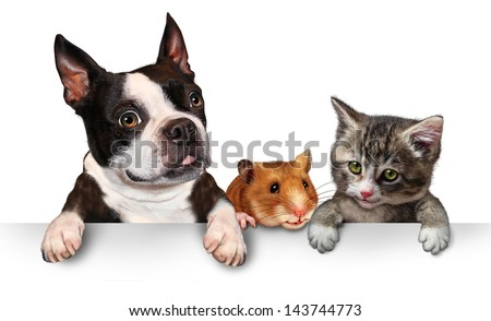 Pets sign for veterinary medicine and pet store or animal adoption advertising and marketing message with a cute dog hamster and a cat hanging on a horizontal white placard with copy space. - stock photo