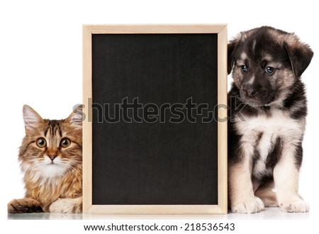 Pets with blackboard - stock photo
