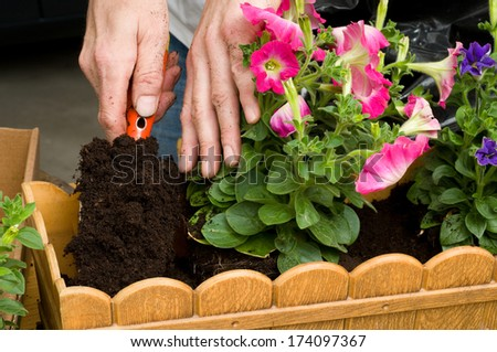 Petunia is a trumpet shaped, widely-cultivated genus of flowering plants of South American origin, in the family Solanaceae. - stock photo