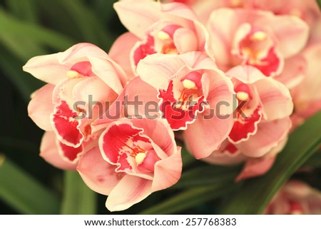 Phalaenopsis,Moth Orchid flowers,beautiful pink with yellow flowers blooming in the garden - stock photo