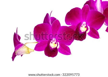 phalaenopsis orchid species on isolated white background - stock photo