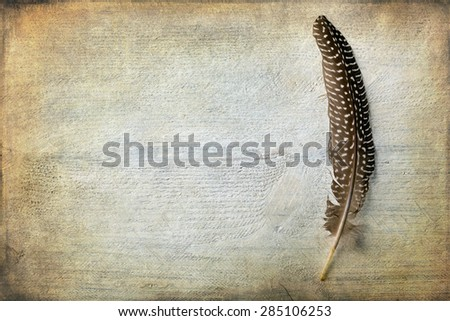 Pheasant feather lying on a grunge piece of wood with copy space - stock photo