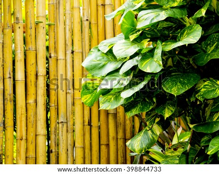 philodendron leaf with bamboo background - stock photo