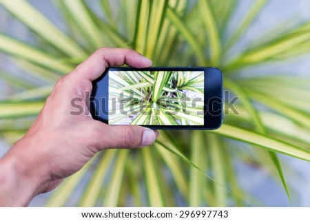 Phone camera with green leaf - stock photo
