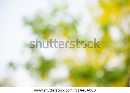 Photo by Lens defocus of Golden shower use as background. - stock photo