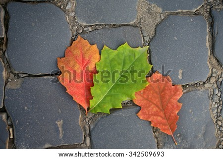 Photo closeup of three beautiful fallen bright dry colorful red green oak leaves on slate flag-stone pavement autumn season over dark grey stone background, horizontal picture - stock photo