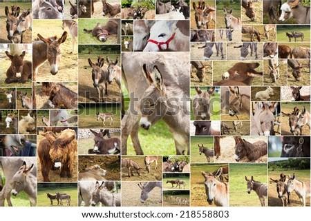 photo collage donkeys - stock photo