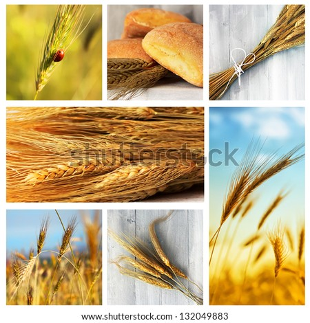 Photo collage of wheat, rye and bread - stock photo
