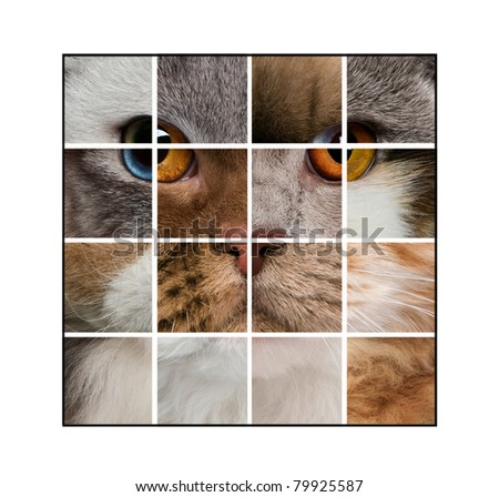 Photo composition of a cat's head made with various cats, in front of white background - stock photo