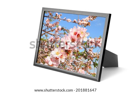 Photo frame with picture of blossoming almond tree orchard. Isolated on a white background.  Collage of my photos - stock photo