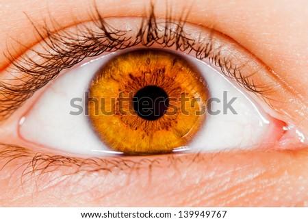 Photo Human eye close-up. - stock photo