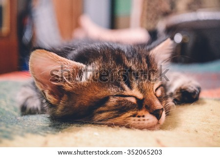 photo kitten sleep - stock photo