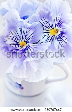 Photo of a beautiful Viola flowers . - stock photo