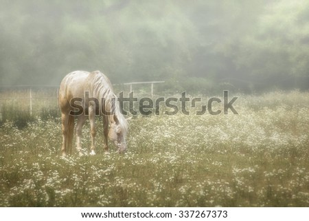 Photo of a beautiful white horse grazing in a pasture filled with white wildflowers with a foggy atmosphere. - stock photo
