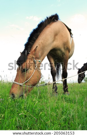 Photo of a brown horse when he graze - stock photo