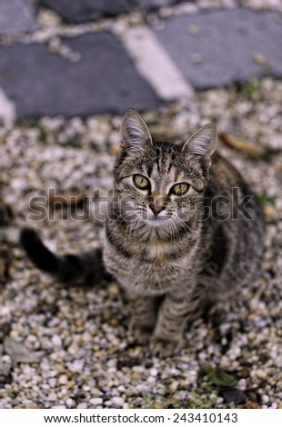 Photo of a cat. - stock photo