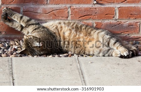 Photo of a cat lounging in the sun - stock photo