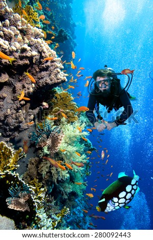 Photo of a coral colony and diver,  Red Sea. - stock photo