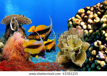 Photo of a coral colony and Pennant coralfish (bannerfish) - stock photo