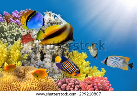 Photo of a coral colony on a reef top, Red Sea, Egypt. - stock photo