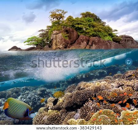 Photo of a coral colony on a reef top. Red Sea. Egypt - stock photo