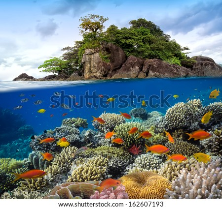 Photo of a coral colony on a reef top, Siam Bay, Thailand - stock photo