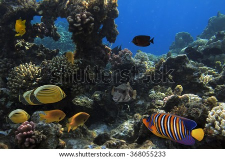 Photo of a coral colony, Red Sea, Egypt. - stock photo