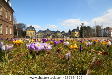 photo of a crocus meadow, castle in the background - stock photo