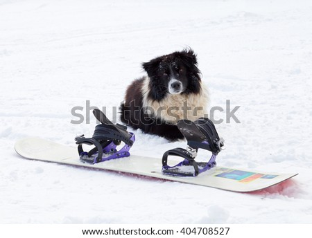 Photo of a dog sitting behind a snowboard - stock photo