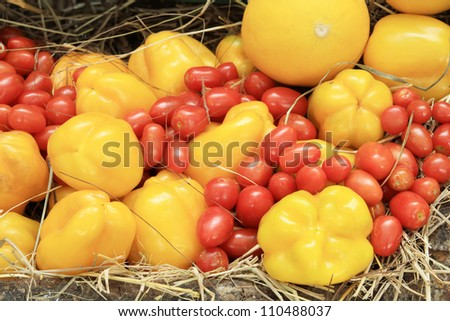 Photo of a large group of tomato and chili on straw - stock photo