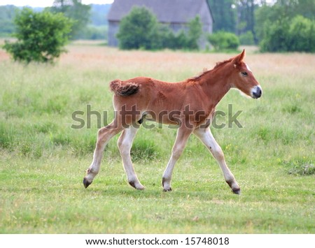 Photo of a lovely young brown horse on pasture - stock photo