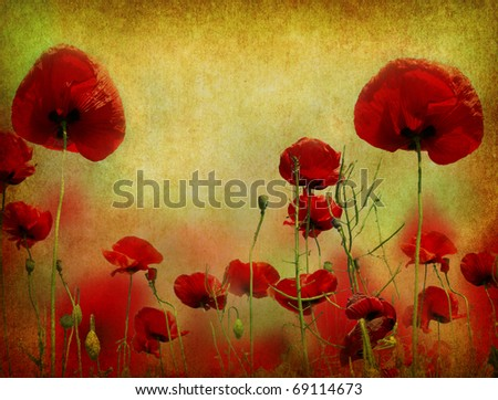 Photo of a poppies pasted on a grunge background - stock photo