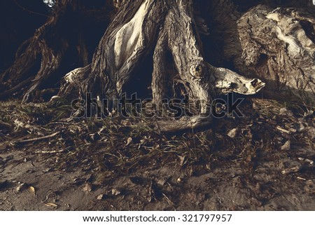Photo of a tree's branched root in the forest - stock photo