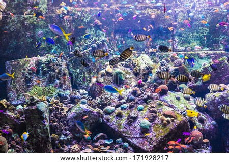 Photo of a tropical fish on a coral reef in an aquarium - stock photo